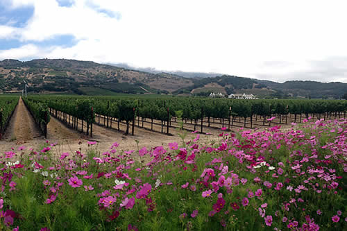 wine tasting and touring in napa valley